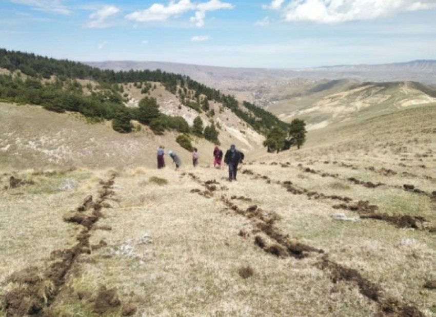 Даглесхоз выполнил лесовосстановительные работы в рамках нацпроекта на 100%