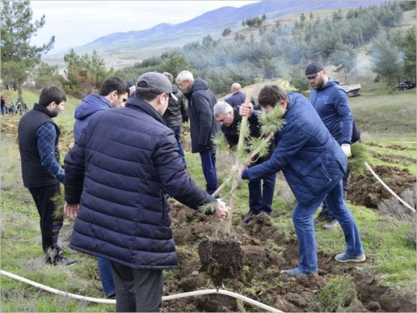 В Дагестане реализуется федеральный проект «Сохранение лесов»