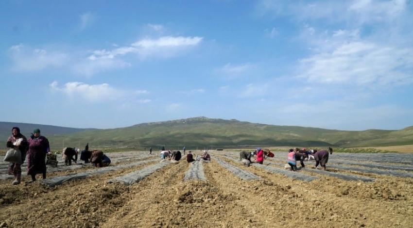 В Дербентском районе реализуется масштабный инвестпроект в сфере АПК