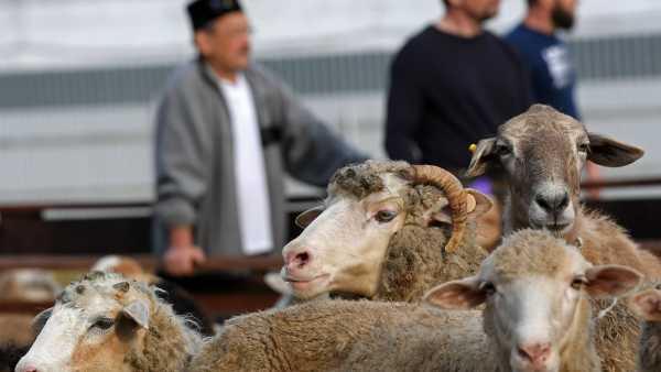 Нуждающиеся дагестанцы получат мясо на Курбан-байрам от руководителя республики