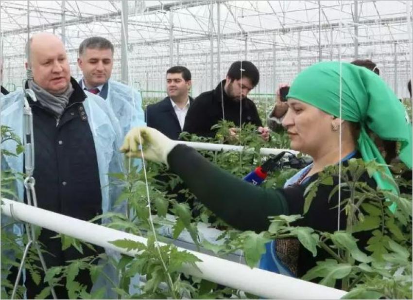 Чеботарёв и Здунов посетили тепличный комплекс в Ленинкенте