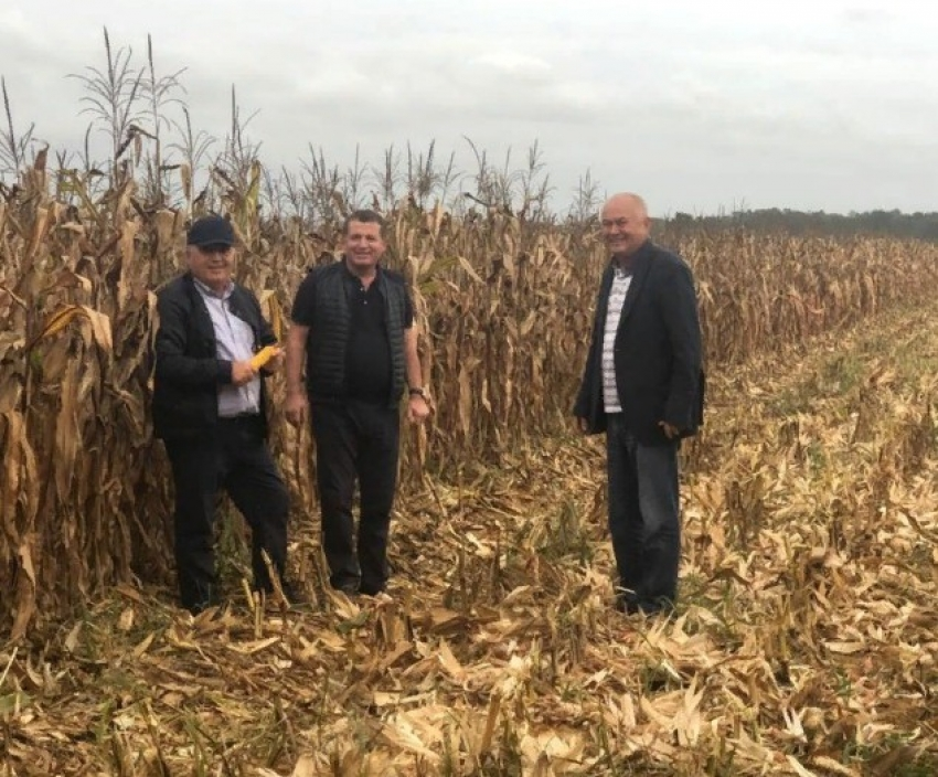 В Дагестане началась уборка кукурузы на зерно