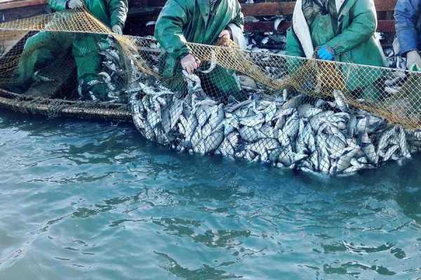 Меры господдержки рыбного промысла