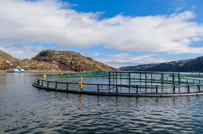 В Дагестане около 100 предприятий заняты в сфере товарной аквакультуры