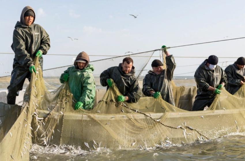 Добыча рыбы в Дагестане выросла почти в 3 раза