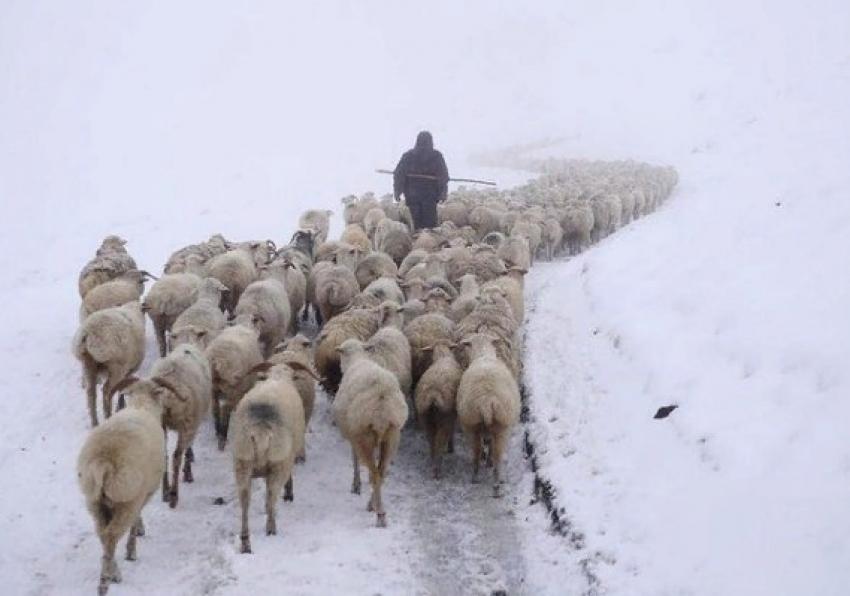 Ситуация с дагестанским пастухом в Калмыкии завершилась благополучно