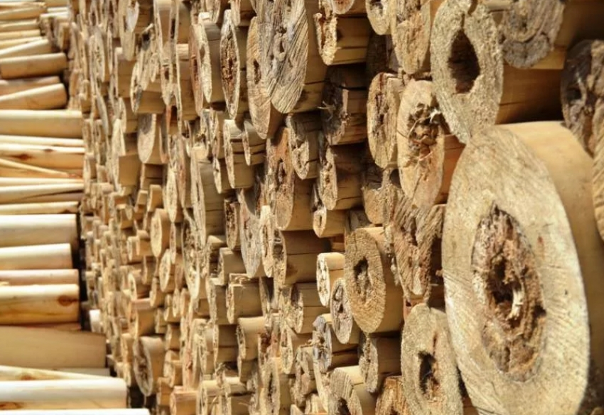 В Дагестане возбуждено уголовное дело о контрабанде древесины за рубеж