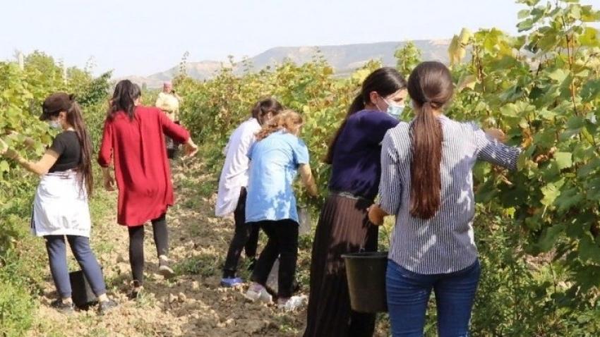 Минтруд Дагестана трудоустраивает школьников